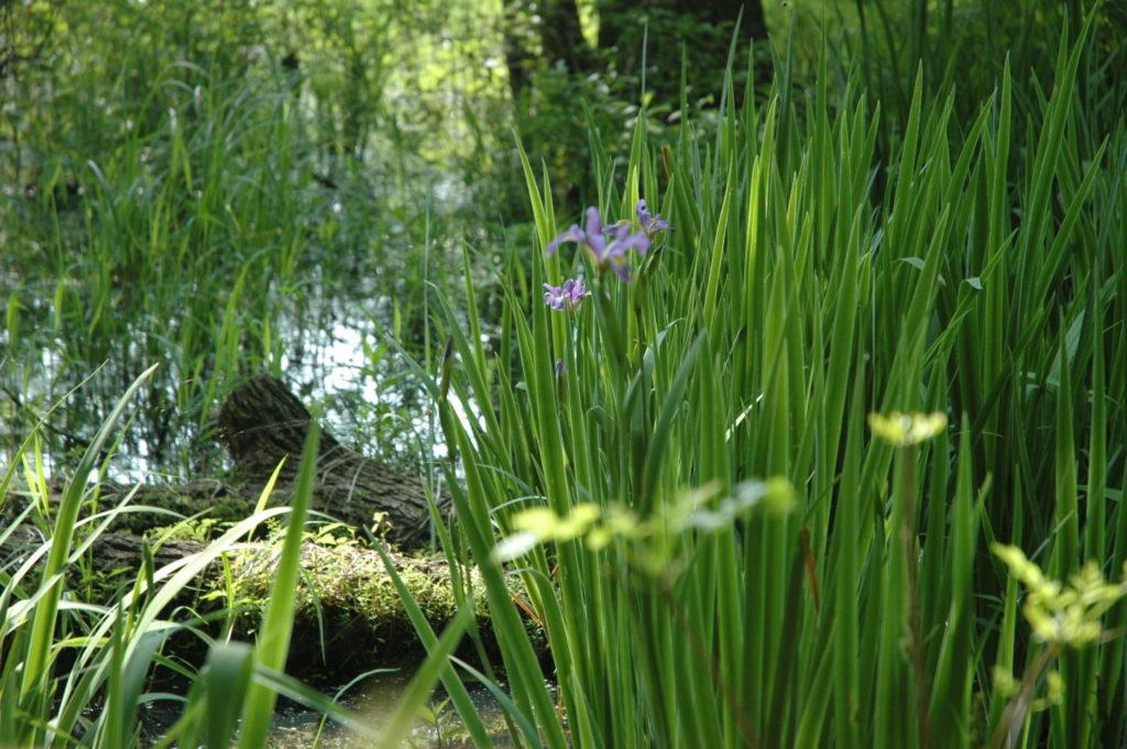 Mystic Ridge nature scene